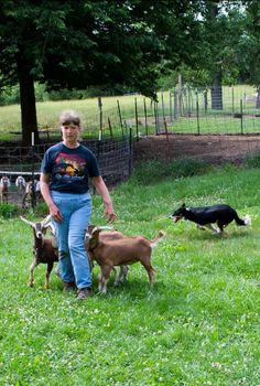 Author Reyna Bradford shares her amazing life living on the Kansas Flint Hills where she raises Nubian dairy goats, trains dogs for AKC competitions, and many other things that defy her lack of sight. Flint Hills, Bradford, Dog Training, Kansas, Goats, Trains, Dairy, Author, Amazing