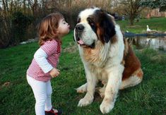 Get a Free Consultation for your #dog from our Friends at Nature's Select http://naturalpetfooddelivery.com/nsd/usa/free-consultation/ #babies