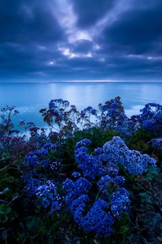 Sunset blues, a while after sunset in Encinitas, California