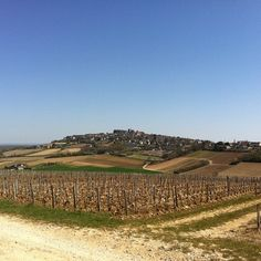 Sancerre - wonderful wine, fabulous scenery and only a stonesthrow from gorgeous goats cheese at Chavignol