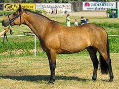 Lijst van paardenrassen - Wikipedia