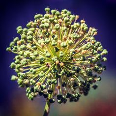 @bobakradbin #gettymuseum #museum #flower #canon #garden #nature #green (Taken with instagram)