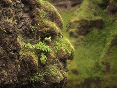 Stone Troll face covered in moss