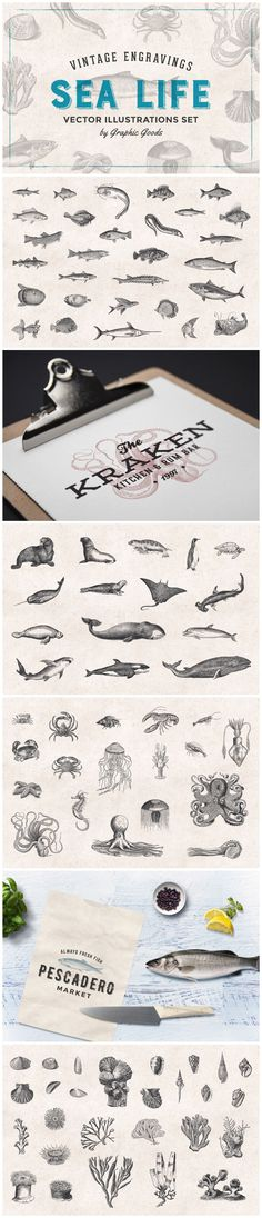 Fishes & Sea Life Engravings Set by Graphic Goods Wels Catfish, Sea Logo, Hammerhead Shark, Underwater Creatures, Graphic Illustration, Illustrations, Killer Whales, Fly Fishing, Illustration
