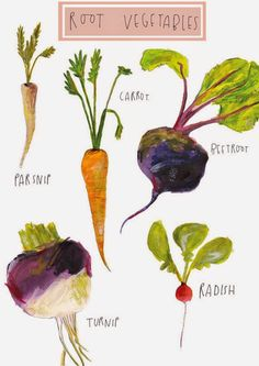 Items similar to Root Vegetables. Limited Edition Illustration by Faye Bradley on Etsy Art And Illustration, Illustration Mignonne, Food Illustrations, Poster Art, Guache, Root Vegetables, Food Drawing, Kitchen Art, Botanical Prints