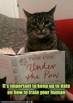 Image result for cat reading images
