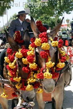 Decorated Donkey  Google Image Result for http://www.picturescolourlibrary.co.uk/loreswithlogo/8930406.jpg