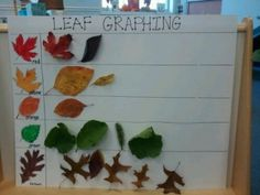 into fun with leaf activities Graphing leaves- great for sorting and leaf identification @ Creative Tots Mason PreschoolGraphing leaves- great for sorting and leaf identification @ Creative Tots Mason Preschool Fall Preschool Activities, Kindergarten Science, Preschool Lessons, Preschool Classroom, Preschool Theme Fall, Preschool Graphs, Science Center Preschool, Science Room, Counting Activities