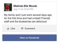 People love picking blueberries here
