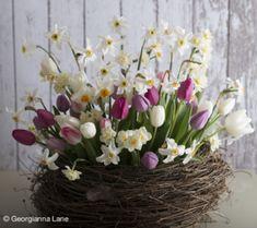Florals Spring Flower Arrangements, Floral Centerpieces, Floral Arrangements, Cut Flowers, Spring Flowers, Rehearsal Dinner Decorations, Arte Floral, House Plants, Flower Pots
