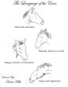 know your horse~