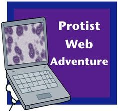 Protist Web Adventure Trying to get your class excited about Amoebas, Paramecium, and Euglenas?  I know, its next to impossible, but this resource is here to help!This activity introduces your class to the protist kingdom, then sends them on a reading and internet adventure to learn more about three specific protists: amoebas, paramecium, and euglenas.