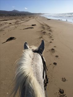 The best view of the beach is seen between the ears of a horse! Pretty Horses, Horse Love, Beautiful Horses, Animals Beautiful, Equestrian Outfits, Equestrian Style, Horse Ears, Horse Ranch, Horse Photography