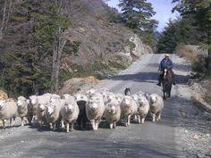 CHILE Seno de Ultima Esperanza, Puerto Natales,