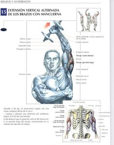 All Body Workout, Gym Workout Videos, Forearm Workout, Dumbbell Workout, Fit Board Workouts, Gym Workouts, Bodybuilding Routines, Workout Posters, Muscle Anatomy