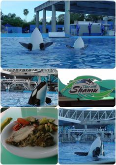Dining with Shamu at @SeaWorld Orlando. Fun times with the Frog Family! #SeaWorld