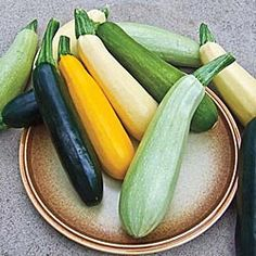 Summer Bounty Hybrid Blend Squash from Gurney's -- includes Limon (light yellow), Greybeard (grey), Butta (yellow and blocky), Golden Girl (gold), and Obsidian (dark green). I don't care which I eat, I like 'em fried, steamed and sometimes boiled too (but not into mush like Mom's >.< )