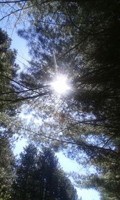 gli alberi nel mio cammino...