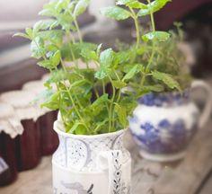 """Θα εκπλαγείς όσο και εμείς όταν μάθεις ότι υπάρχουν φυτά που δε χρειάζονται καθόλου χώμα για να ριζώσουν! """"Ποια φυτά βγάζουν ρίζες στο νερό"""" θα μας ρωτήσεις. Την απάντηση ούτε που την είχες φανταστεί! Easy Plants To Grow, Growing Plants, Tulsi Vivah, Growing Cherry Tomatoes, Soil Layers, Indian Festivals, Coriander Seeds, Potting Soil, Plantation"""
