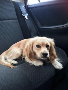 Tammy Lynn is an adoptable Dog - Papillon & Spaniel Mix searching for a forever family near Marina Del Rey, CA. Use Petfinder to find adoptable pets in your area.