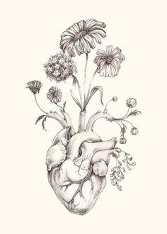 "8 x 10"" impresión de original dibujo""Florecer el corazón""-grafito, arte, Anatomía, flores, corazón, San Valentín por MomeRathGarden"