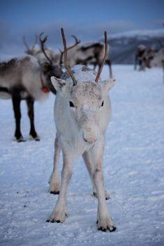 Nature Animals, Felt Animals, Baby Animals, Cute Animals, Tromso, Tier Fotos, Beautiful Creatures, Animal Photography, Pet Birds