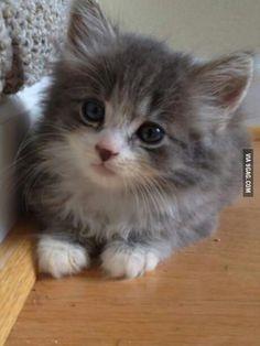 Cute fluffy kitten...AWWWW