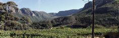 Silvermist Wine Estate in Constantia: Organic Wine Estate & Restaurant: La Colombe (opening Oct. 2014) Cape, Restaurants, Mountains, Nature, Travel, Shopping, Colombia, Mantle, Cabo
