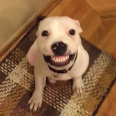 SIT, SPEAK, STAY... say cheese? This dog was taught to smile for the camera! Nice teeth! What's the best trick YOUR pet knows?