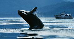 Van kanovaren en orka's spotten tot kamperen op afgelegen plekken: kies één van deze avontuurlijke activiteiten en beleef een onvergetelijke zomer in The Great Wide North!