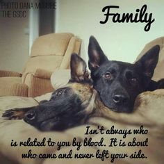 Dogs are family