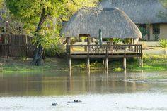 Arathusa Safari Lodge - Sabi Sands Game Reserve, Kruger National Park | Simply South Africa Holidays South Africa Holidays, Sand Game, Kruger National Park, Game Reserve, Sands, Lodges, Safari, Earth, House Styles