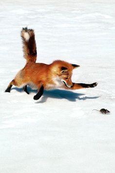 Fox Hunt Photography http://ift.tt/1OtDdVa