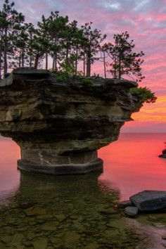 The tress growing on a unique rock island formed by erosion. It's located in Lake Huron, Michigan, and is named Turnip Rock.