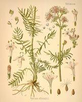 http://botanical.com/