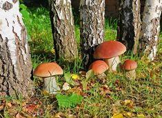 Našla v lese několik hub a udělala s nimi něco geniálního! Jednoduchý způsob jak si doma pěstovat vlastní houby! | Vychytávkov Wild Mushrooms, Stuffed Mushrooms, Mushroom Fungi, Planting Flowers, Pesto, Pumpkin, Gardening, Vegetables, Wood