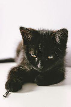 Meet Florence the Kitten