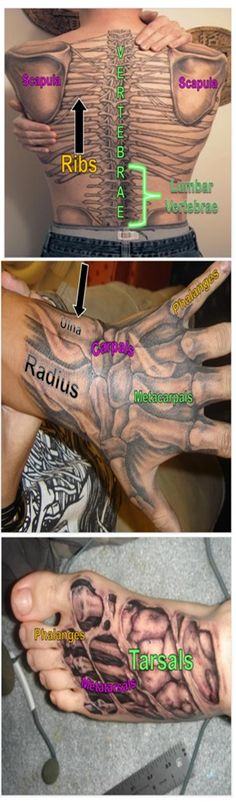 Skeletal System Tattoos: A unique way to learn muscle and bone anatomy! Medical Coding, Medical Science, Medical School, Skeletal System, Human Anatomy And Physiology, Nursing Tips, Medical Assistant, Medical Field, Body Systems
