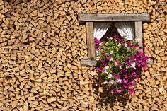 #legnaia #woodshed