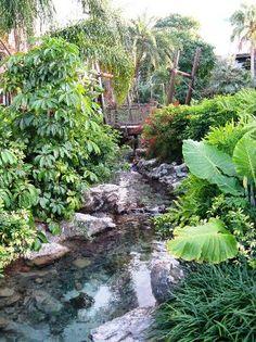 Photos of Disney's Polynesian Resort, Orlando - Resort Images - TripAdvisor Orlando Resorts, Orlando Florida, Polynesian Village Resort, Disney World Pictures, Trip Advisor, Vacation, Photo And Video, Water, Plants