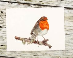 Robin on a Branch Actual Painting 10x8 inch Watercolor Painting bird botanical art Tennessee Flowers shabby chic farmhouse decor red twig by JoyNeasleyStudios on Etsy