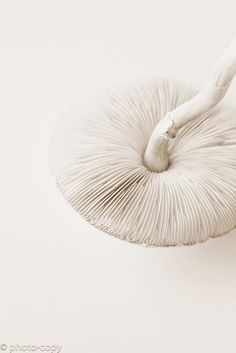 white mushroom by photo-copy, via Flickr