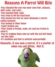 Reasons a parrot will bite... Because I can!