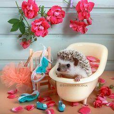 Cute Small Animals, Cute Funny Animals, Funny Animal Pictures, Cute Baby Animals, Animals Beautiful, Animals And Pets, Hedgehog Care, Happy Hedgehog, Cute Hedgehog