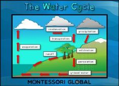 Boom Cards - The Water Cycle Water Cycle, Social Studies, Geography, Montessori, Deck, Knowledge, Learning, Cards, Life