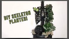 Skeleton Decorations, Diy Halloween Decorations, Halloween Ideas, Garden Plants, House Plants, Indoor Garden, Plant Crafts, Diy Crafts, Indoor Plant Wall