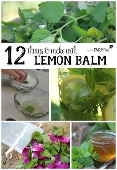 12 Things to Make With Lemon Balm - Lemon balm is an easy to grow herb that not only attracts bees to the garden, but is also a great anti-viral with relaxing properties that are helpful for soothing frayed nerves and calming hyper children. Herbal Remedies, Home Remedies, Natural Remedies, Health Remedies, Healing Herbs, Medicinal Plants, Culture D'herbes, Herbal Medicine, Natural Medicine