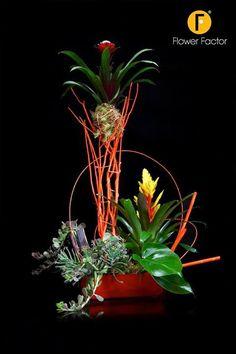 Bromelia  Floral Tweetjam Alden Biesen Flower Factor
