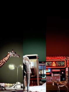 Animal city. photo by Kerry Shaw