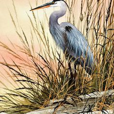The delicate natural beauty of a secluded, quiet resting place for a blue heron along a bright driftwood shore. An original watercolor painting by Fine Art America artist James Williamson recreated as a fine art print by Fine Art America. Driftwood Shores, Flying Bird Silhouette, Watercolor Paintings, Original Paintings, Blue Heron, Wire Art, Bird Prints, Print Pictures, Art Images
